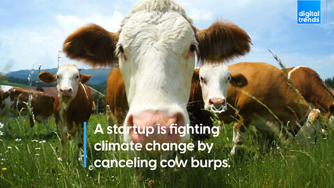A startup is fighting climate change by canceling cow burps.
