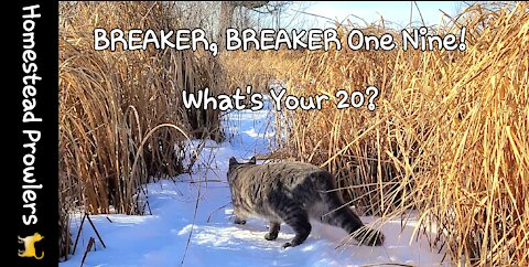 Homestead Cats Communicate To Each Other While on Winter Walk