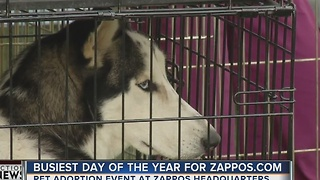 Pet adoption event at Zappos