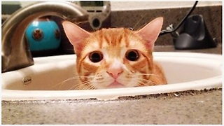 Marmalade's Feline Guide To Human Bathroom For Dummies - Video
