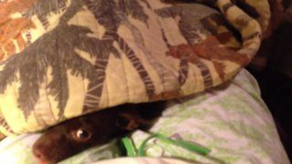 These Pets Love to Play Hide and Seek