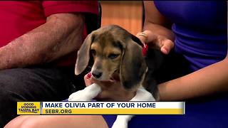 Rescues in Action: Olivia