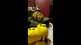 Owner tricks cat into thinking toy is alive