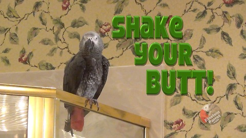 Parrot demands that you shake your booty