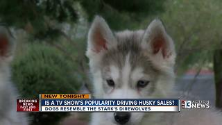 'Game of Thrones' prompts Siberian Husky craze - Video