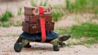 Turtles on the Move - Video