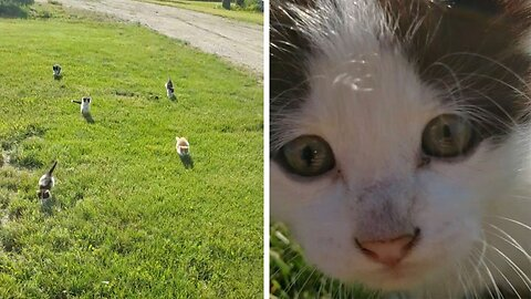 Adorable Group Of Kittens Chase After 'Screaming' Owner