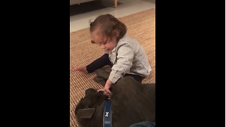 Baby Girl Plays With Gentle Pit Bull