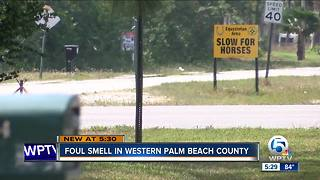 Strange smell in parts of Palm Beach County - Video