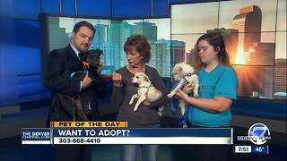 Pet of the day for November 4th - Video
