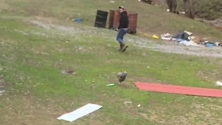 Chicken Chases After Scared Man - Video