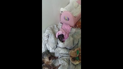 Adorable Lil dog in a pig costume