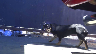 Three homeless dogs rescued from hard life on the streets. Please share. - Video