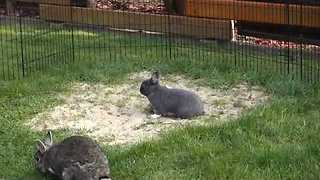 Excitable Bunny Hops Around Garden - Video