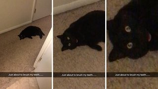 Creepy stalker cat won't leave its owner alone