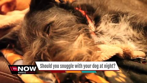 Should you snuggle with your dog