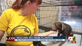 Greater Cincinnati residents help pets displaced by Florence