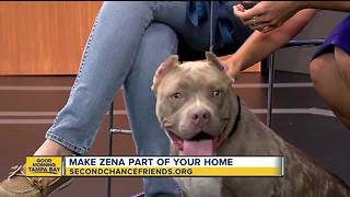 Rescues in Action June 9, 2018 | Zena seeks furever home - Video