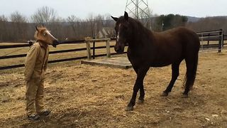 Horse Gets Freaked Out Horse Mask - Video