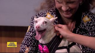 Sept. 2 & 3 Rescues in Action: Whitey needs forever home - Video