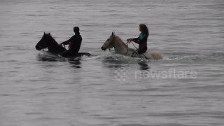 Cornwall swimming horses getting ready ahead of 'hottest May bank holiday'