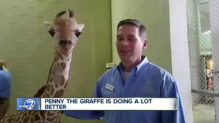 Top Stories: Westy murder, rehab closure, giraffe - Video
