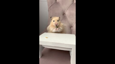 Super Fluffy Hamster With A Tiny Table Made Myself