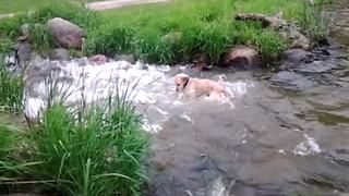 Dog Goes Fishing In A Pond