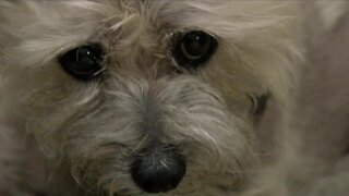 Local NextDoor users rally behind 13-year-old dog attacked by a coyote