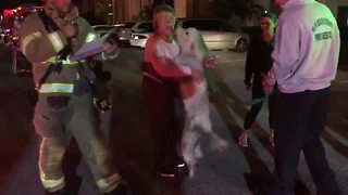 Elated family dog saved from fire in suburban Delray Beach, reunited with family - Video