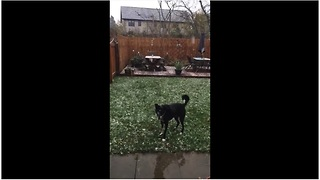 Winter-loving dog tries to catch falling snowflakes - Video