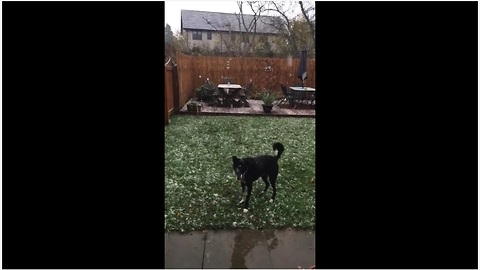 Winter-loving dog tries to catch falling snowflakes
