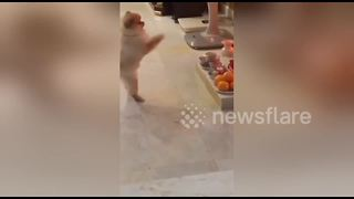 Cute dog appears to worship at religious shrine - Video