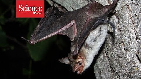 Why do bats crash into smooth surfaces? They never 'see' them
