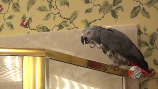 Hungry Parrot Reminds Owner It's Dinner Time In The Most Hilarious Fashion - Video