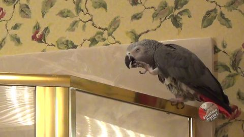 Hungry Parrot Reminds Owner It's Dinner Time In The Most Hilarious Fashion