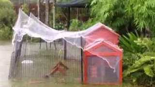 Heavy Rain Causes Flooding in Cairns - Video