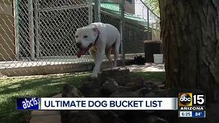 Dog diagnosed with skin cancer has bucket list to complete! - Video
