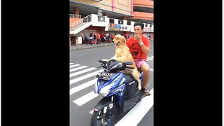 Adventurous Dog Wearing Sunglasses Rides On Motorcycle