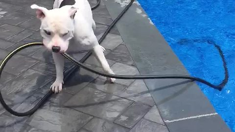 Clever Dog Makes His Own Water Fountain