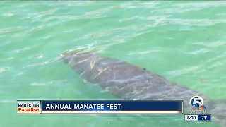 Annual Manatee Fest held in Riviera Beach