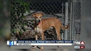 Reward increased for dog found with mouth taped shut in Lehigh