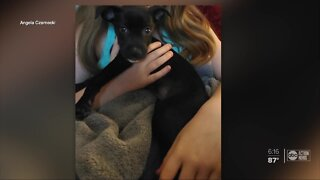 Hillsborough Co. family says they were sold sick puppy off Craigslist
