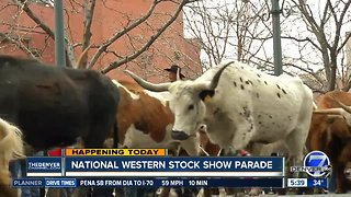 National Western Stock Show parade - Video