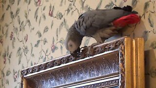 Cultured parrot flies to admire a piece of art
