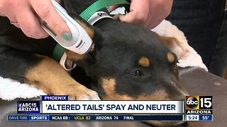 Altered Tails offering discount on spay/neuter services - Video
