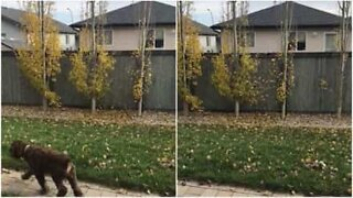 Man throws leaves over neighbor's fence after an argument