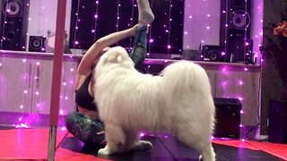 And They Call It Puppy Love – Pooches Interrupt Owners Yoga Session With Kisses - Video