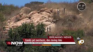 Family dog dies on Cowles Mountain hike - Video