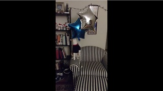Cat plays with balloons just like a child